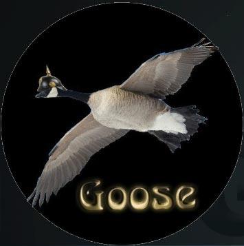 goose kodi addon